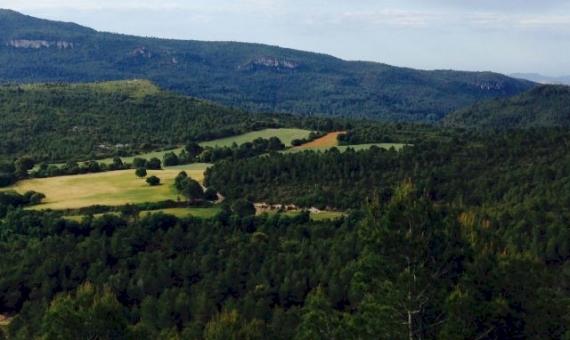 Поместье с конюшнями на участке 300 Га в Таррагоне | 10772-3-570x340-jpg