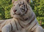12455 — Вилла с землей 60 ГА и зоопарком | 12347-1-150x110-jpg