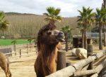 12455 — Вилла с землей 60 ГА и зоопарком | 12347-9-150x110-jpg